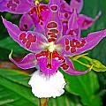 Morning Joy Orchid by Rich Walter