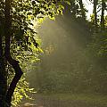 Morning Light by Melinda Fawver