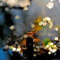 Morning Light by Naret Singusaha