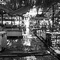 Morning Market by Jez C Self