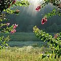 Morning Marsh by Carol Groenen