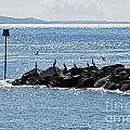 Morning Meeting - Lyme Regis by Susie Peek