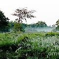 Morning Mist by Amar Sheow