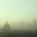 Morning Mist by Argun Tekant