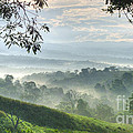 Morning Mist by Heiko Koehrer-Wagner