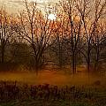 Morning Mist by Kimberly Davidson