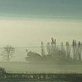 Morning Mist by Ron Harpham