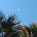 Morning Moon Over Palms by Fortunate Findings Shirley Dickerson