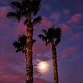 Morning Moon by Robert Bales