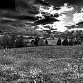 Morning On The Farm Two Bw by Ken Frischkorn