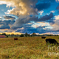 Morning On The Farm Two by Ken Frischkorn