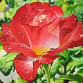 Morning Rose by Art Carrillo