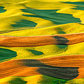 Morning Shadows On The Palouse by Patricia Davidson