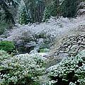 Morning Snow In The Garden by Don Schwartz