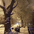 Morning Snow by Katerina Naumenko