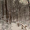 Morning Snow Path by Lauri Novak