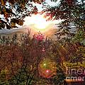 Morning Sunbeams by Karen Lewis