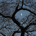 Morning Twilight by Scott Rackers