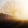 Morning Vineyard by Shannon Beck-Coatney
