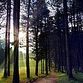 Morning Walk by Steve  Ondrus
