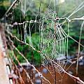 Morning Web by Kurt Jones