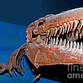 Mosasaur Tylosaurus Proiger by Millard H. Sharp