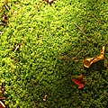 Moss And Leaves by Bill Tomsa