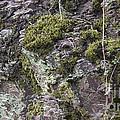 Moss And Lichen by Teresa Mucha