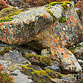 Moss And Lichens In The Scottish Highlands by Louise Heusinkveld