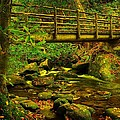 Moss Bridge by Mary Young