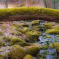 Moss Bridge by Scott Hafer