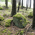Moss-covered Boulder by Michal Boubin