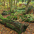 Moss Covered Logs On The Forest Floor by Gill Billington