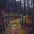 Moss Covered Path by Joan McCool