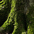 Moss Covered Tree Trunk by Christina Rollo