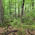 Moss Covered Trees In Forest, Lord by Panoramic Images
