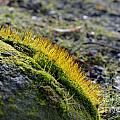 Moss In The Light by Felicia Tica
