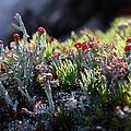 Moss by Karen Harrison