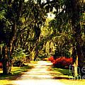 Moss On The Trees At Monks Corner In Charleston by Susanne Van Hulst