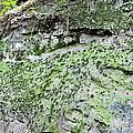 Moss Rock by Maria Urso