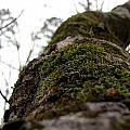 Moss by Sarah Houser