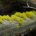 Moss by Sebastian Musial