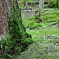 Mossy Endevor by Nikki Vig