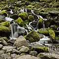 Mossy Falls by Heather Applegate