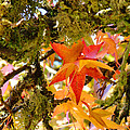 Mossy Lichen Tree Leaves Art Prints Autumn by Baslee Troutman