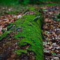 Mossy Log by Andrew Slater