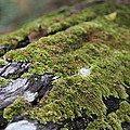Mossy Log by Keith Hawley