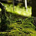 Mossy Log by Patrick Moore