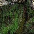 Mossy Moss by Rick Kuperberg Sr