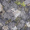 Mossy Mouldy Rock Texture by Antony McAulay